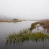 """Spring Fog Moving In, Sesuit Marsh"", photography by Anita Winstanley Roark.  Contact us for edition and size availability."