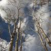 """Aspen Skies, Colorado Springs"", photography by Anita Winstanley Roark.  Contact us for edition and size availability."